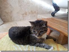 cat_sgs2