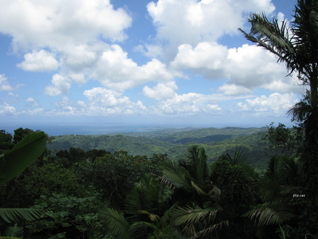puerto rico wallpaper. rain forest in Puerto Rico